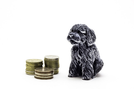 Dog with coins close-up