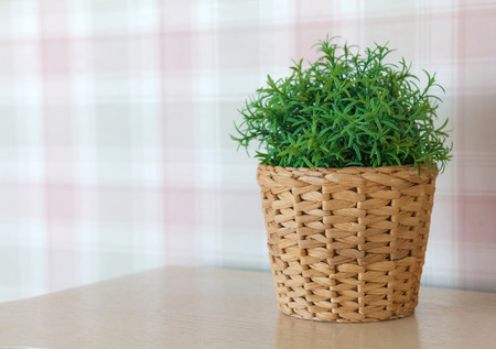 Flower in a basket in the bright Scandinavian-style kitchen, against a background of colorful wallpaper, space for text