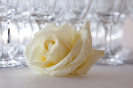 White rose on the table, in the background glasses of champagne, wedding event, close-up Stock Photo