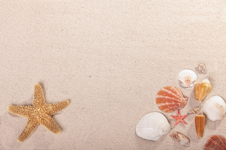 Seashell and starfish on sand photo