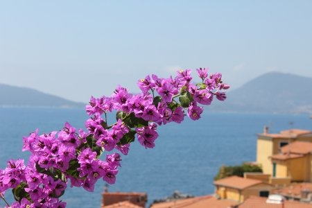 seaview: Seaview with flower over Mediterranean village Stock Photo
