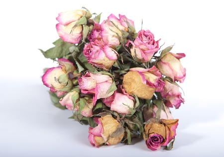 dried flower arrangement: Dry roses over white background