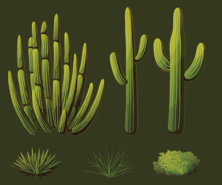 Set of plants growing in the desert of Arizona Illustration