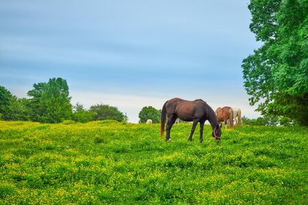 Horses grazing on fresh spring grass in a field.