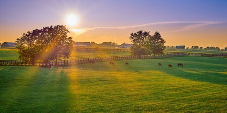 Thoroughbred horses grazing at sunset in a field.