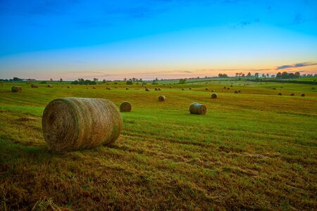 Round hay bails in a field at sunset. Imagens