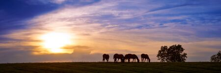 Horses grazing with sunset in the background.