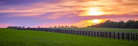 Thoroughbred horses grazing at sunset. Imagens