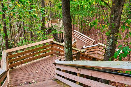 Wooden stairs in a wooded forest.
