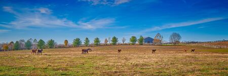 Thoroughbred horses walking in a field with blue sky.