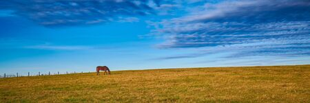 Lone thoroughbred horse grazing in a field with blue sky.