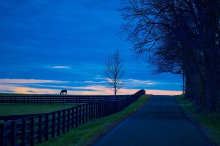 Thoroughbred horse grazing in a field at dusk.