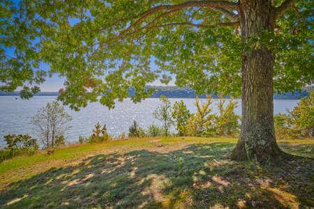 Veiw of Kentucky Lake form under a large oak tree.