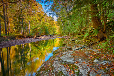 Colorful Fall leaves along War Creek next to Turkey Foot Campground in the Daniel Boone National Forest near McKee, KY.