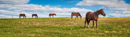 Horses grazing in a field seen through rail fence. 写真素材
