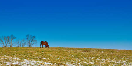 Single horse grazing in a field in winter with blue skies.