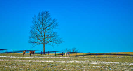 Three horses in a field by a tree against blue sky.