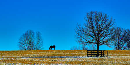 Silhouette of a Thoroughbred horse gazing agianst a blue sky in a snowy field. Imagens