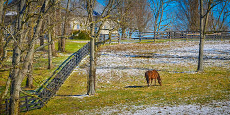 Thoroughbred horse gazing in a winter field with snow.