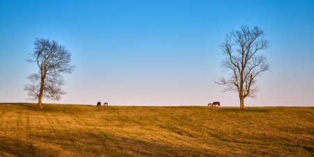 A pair of mares and foals grazing on early spring grass.