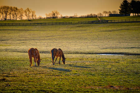 Two thoroughbred horses grazing in a field.