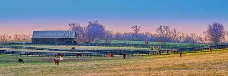 Horses grazing on a farm at dusk.