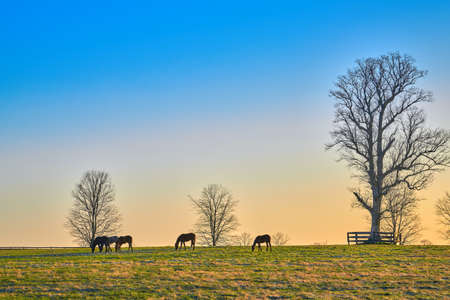 Group of thoroughbred horses grazing in a field. Imagens