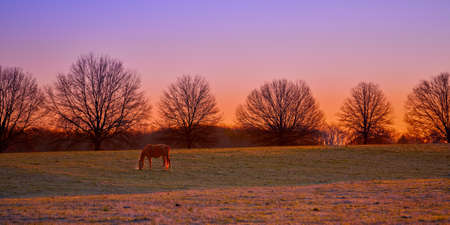 Single thoroughbred horses grazing at sunrise in a field.
