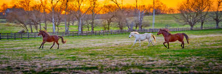 Three horses running in a field at sunset. Imagens