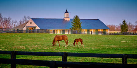 A mare and foal grazing on early spring grass with horse barn in the background.