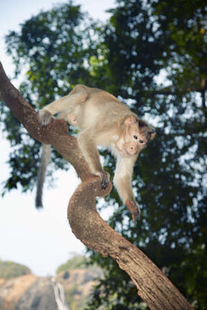 scrambling: Wild monkey scrambling in jungles. Stock Photo