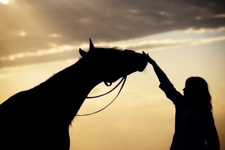 Silhouette of the woman and horse training during sunset
