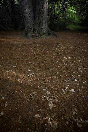 숲에 소나무의 낮은 섹션 스톡 콘텐츠