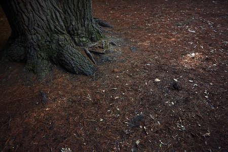 소나무의 뿌리. 닫다