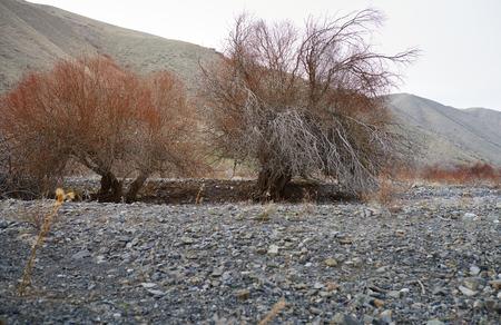 Árboles secos en lugar rocoso Foto de archivo