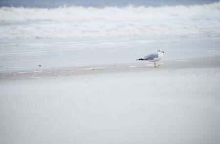 Single seagull at the ocean beach