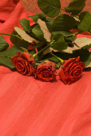 Photo of roses on a red background