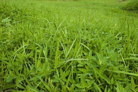 Photography to fresh green field herb miscellaneous