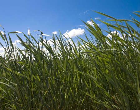 The Landscape of the green field with bright solar sky Stock Photo - 5080441