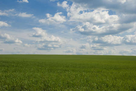 Landscape of the green field with bright solar sky Stock Photo