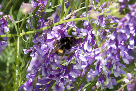 Photography of the bumblebee on year field with colour