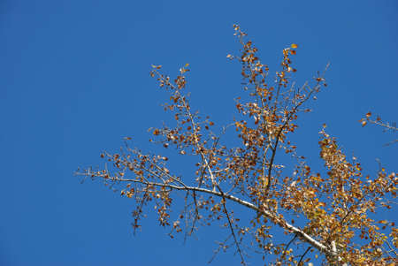 Photo of a dry branch in brightly dark blue sky photo