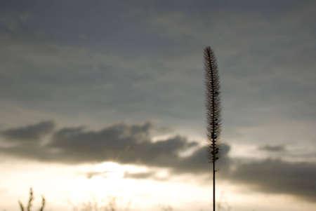 grass against the dark sky
