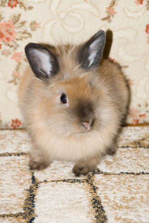 Photo of a small house rabbit sitting on a floor Stock Photo