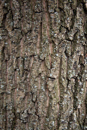 The texture of the bark of a deciduous tree