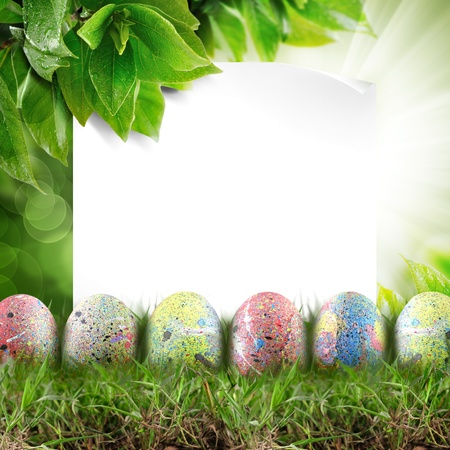 Holly easter eggs. With white paper, copy space Stock Photo - 13269254
