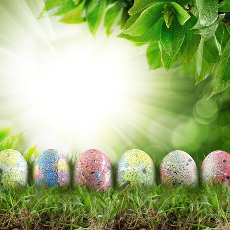 holly easter eggs. With copy space Stock Photo - 13269268