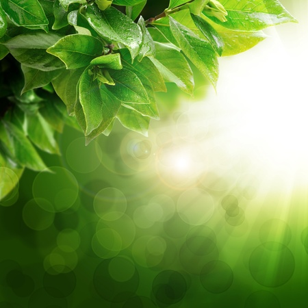 Fresh green with natural leaf and burst of light photo