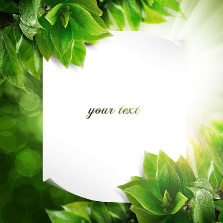 Fresh green template design  With copy space, paper, sample text photo