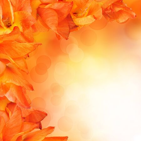 orange flower design. With copy space photo